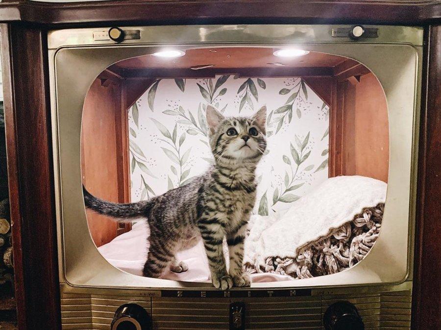 Gatito dentro de una TV