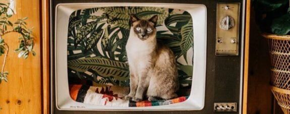 Televisores vintage para los amantes de los gatos