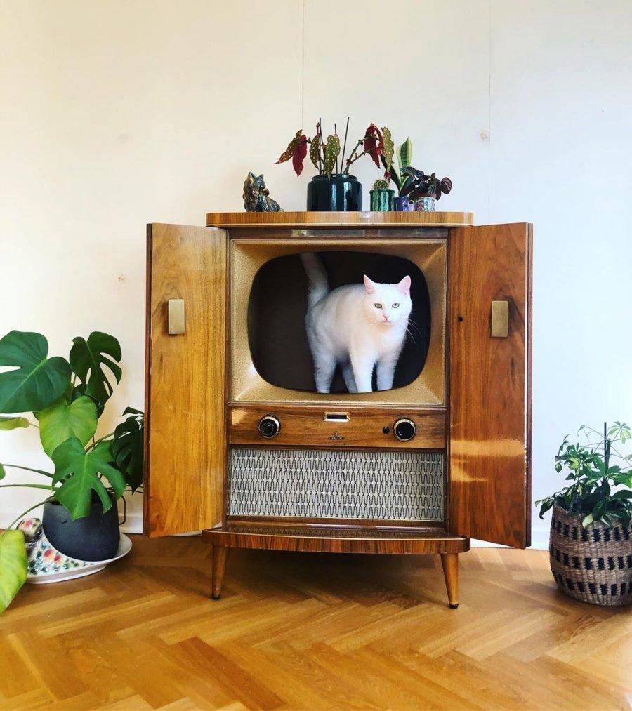 Gatito dentro de un televisor vintage