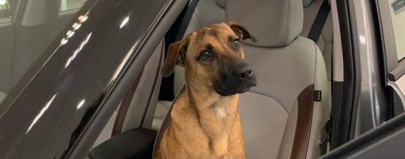 Tucson Prime, de perrito callejero a mascota de Hyundai