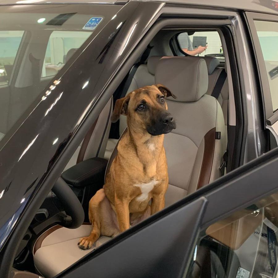 Tucson Prime dentro de un carro