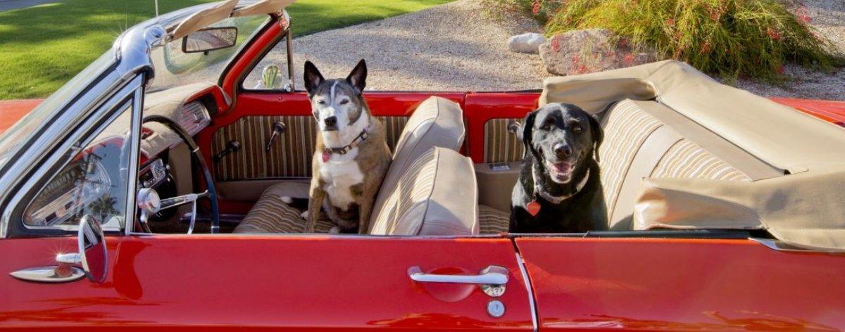 Nancy Baron y la vida lujosa de los perritos californianos