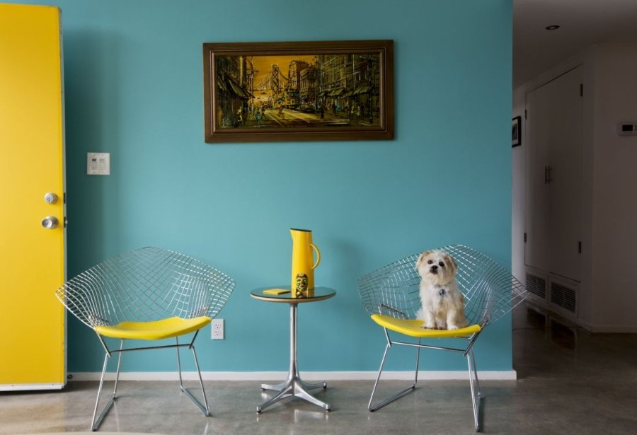 Jimmy, Jack Russell / Shih Tzu Mix Rescue. Arquitecto: Donald Wexler, 1960