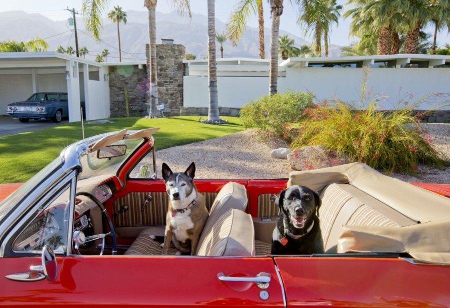 Lillian (izq.) Y Rena, Australian Cattle Dog, Black Labrador Retriever, Rescues, Arquitecto: Jack Meiselman, 1957, Auto: 1963 Corvair © Nancy Baron