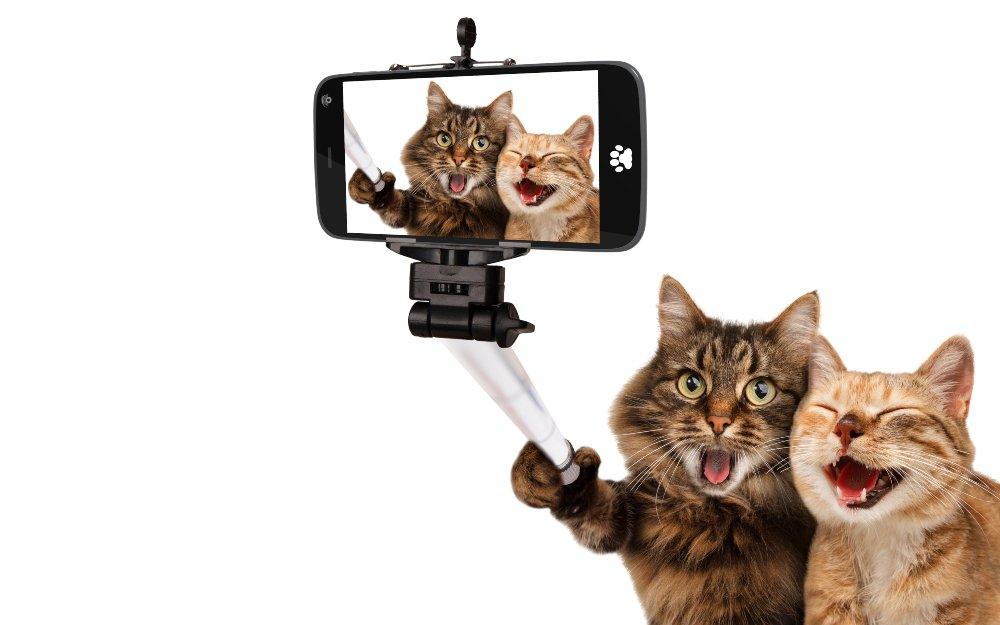gatos que se toman una selfie