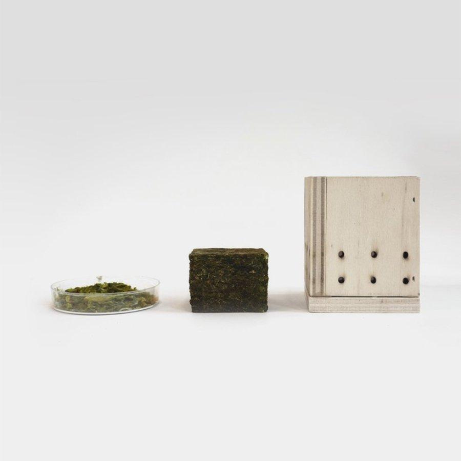 La nueva aldea ecológica hecha de algas diseñada por Ley Bryan, Jie Song y Dinel Mao