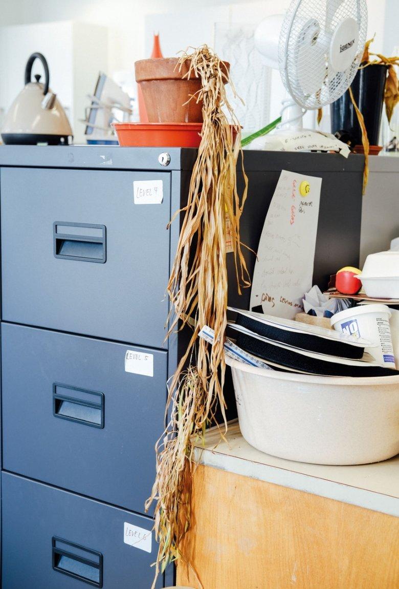 Ricky Adam y las plantas post pandemia olvidadas en la oficina