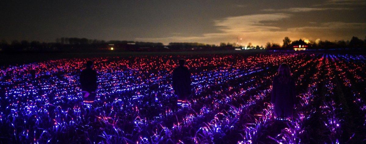 Roosegaarde Studio ilumina cultivos con instalaciones de luz