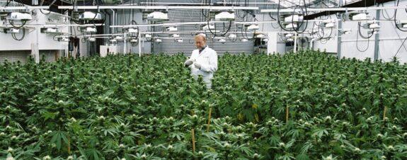 Cannabis de México y sus cuatro pilares para la industrialización