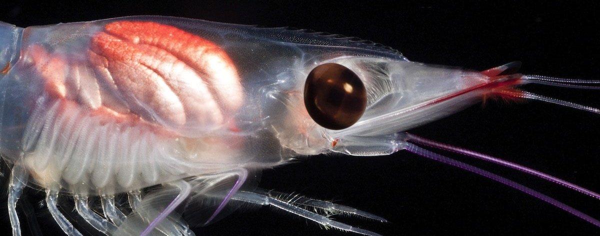Jeff Milisen muestra sus increíbles fotografías acuáticas