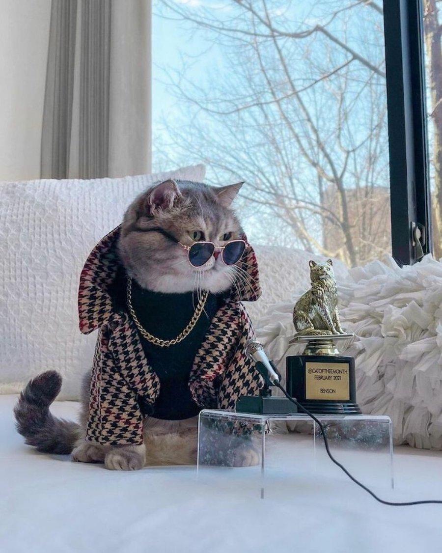 Benson, el gatito fashion