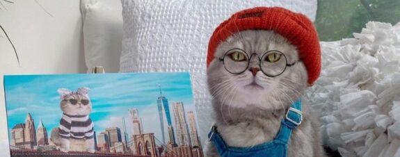 Benson, el gato que es la nueva celebridad de la moda en Instagram