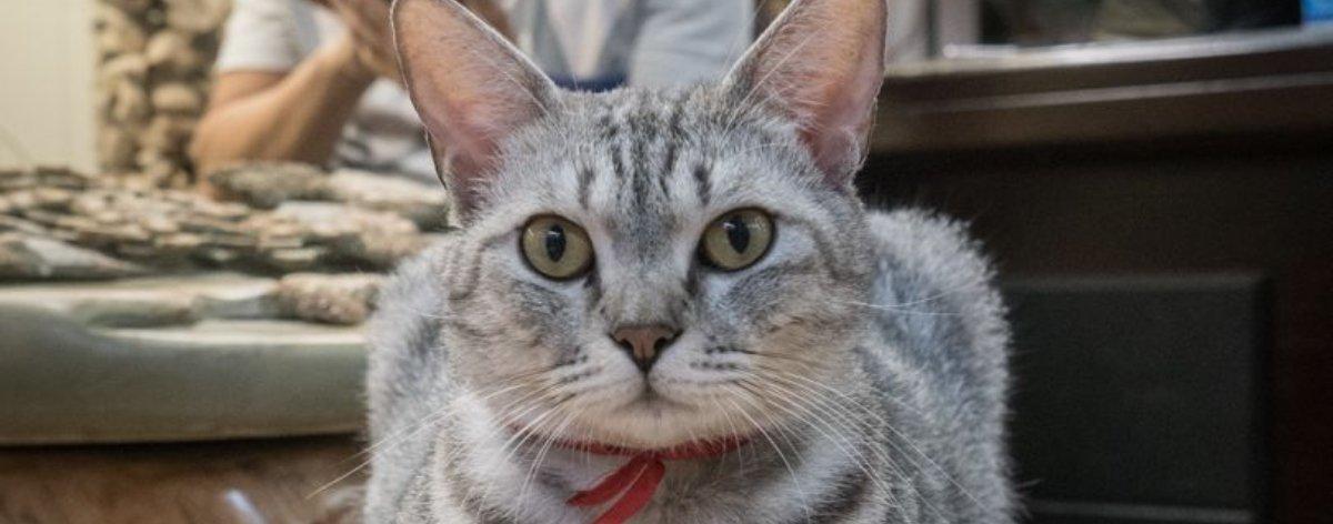 Shop Cats of Hong Kong: los gatitos adorables en las tiendas de China