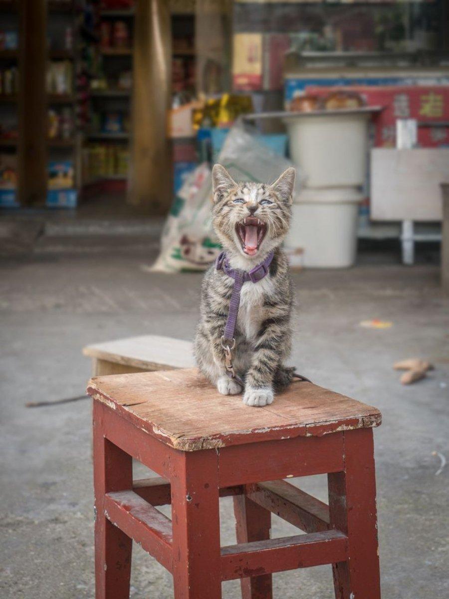 """Fotografía de la serie """"Shop cats of Hong Kong"""""""