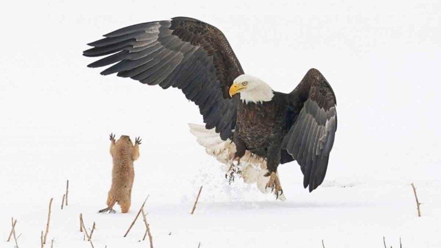 Finalista de The Créditos: Comedy Wildlife Photo Awards 2021